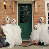 ghost scarecrows